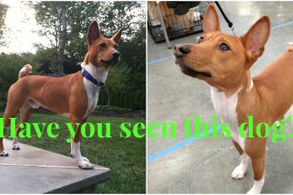Bring Zig home- Lost DOG near Flourtown, PA