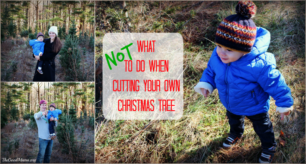 What NOT to do when cutting your own Christmas Tree